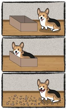 Why buy a paper shredder when you have a corgi?