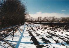 Snowed-In Field