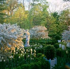 the white garden with tulips, boxwoods, statuary (Photo: Carolyn Roehm)