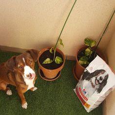 Reembolsado Planter Pots, Dogs, Pictures