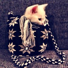 Kitty mochila love