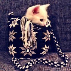 Kitty mochila love