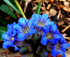 Gentian. (was used to treat aching lower backs) Consult your physician before supplementing to your routine.