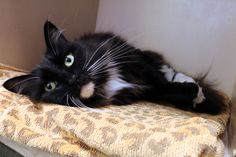 Sia has been adopted from Seattle Humane! :-)