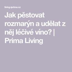 Jak pěstovat rozmarýn a udělat z něj léčivé víno? | Prima Living Pesto