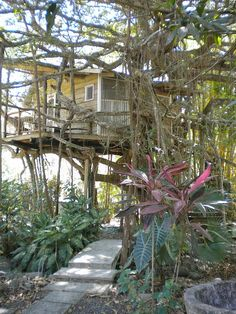 Costa Rican Tree House for Rent- $65/night. Comes with its own pool and waterfall? um... yes please!
