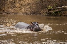Africa Alive. Park Masai Mara 18