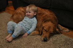 Dogs who really love their best friends (click through for all of them.) Like this golden retriever who happily serves as a pillow for this little boy. SO CUTE.