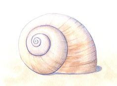 Items similar to Seashell Painting: Moon Snail Shell Original Watercolor Art, Simple Sea Shell Beach Decor, Neutral Beachcombing Art 8 X 10 on Etsy Seashell Painting, Snail Shell, Beach Painting, Shell Art, Seashell Drawing, Art, Original Watercolor Art, Shell Tattoos, Original Watercolors