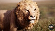 Elevate your workflow with the Animalia - Lion (pack) asset from gim. Find this & other Animals options on the Unity Asset Store. Lions Photos, Female Lion, Unreal Engine, Game Art, Unity, Animation, Outline, Vectors, Valentines