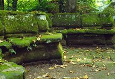 Moss benches
