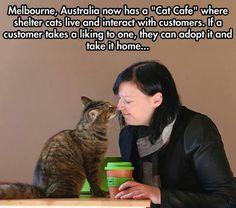 Australian win : good on ya,mates !