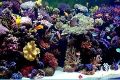 saltwater aqariums | Click on 'thumbnail' images to view full-size.