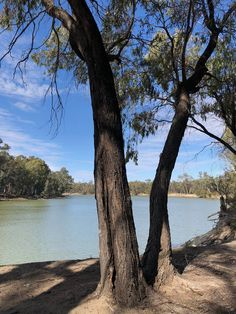 River gums on the banks of the Murray River, Murray-Sunset National Park. Camping Spots, Go Camping, Camping Hacks, Outdoor Camping, Camping Ideas, Outback Australia, South Australia, Victoria Australia, Murray River