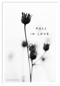 Fall in love love quotes photography black and white flower