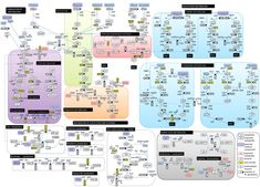 pathways  metabolism and maps on pinterestglucose metabolism diagram metabolic pathway reminds