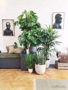 Bring nature inside your home with home plants. There are house plants in all types, sizes and shapes . If they show indicators of pests or condition, heal the problem before you infect your various other interior plants. Bedroom Plants, Bedroom Decor, Bedroom Ideas, Interior Plants, Interior Design, Botanical Interior, Botanical Decor, Interior Modern, The Loft