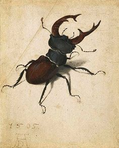 Albrecht Durer, Stag Beetle, 1505, Watercolour
