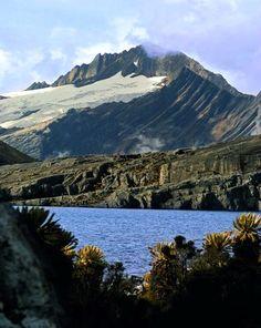 Parque de los Nevados!  Colombia Paisajes  For Information Access our Site   https://storelatina.com/colombia/travelling #Columbia #Колумбия #колумбия #kolon