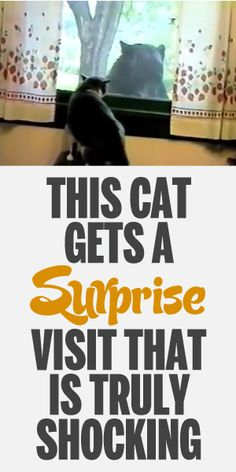 This Cat Gets A Surprise Visit That Is Truly Shocking!