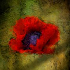 Papaver Orintale by Bill Birtch Young Old, Image Processing, Fine Art, Digital, Drawings, Painting, Painting Art, Paintings, Drawing