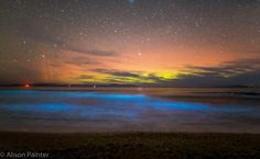 Spectacular Photograph Captures Bioluminescent Plankton And Aurora At The Same Time Bioluminescent Plankton, Sensory Art, World Of Color, Tasmania, Luxury Travel, Wonders Of The World, Natural Beauty, Travel Destinations, Northern Lights