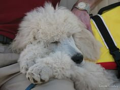 Jake gets tired on his first boat ride   Explore  139 by Louise Lindsay, via Flickr