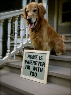 Home is where my fur-friend is.