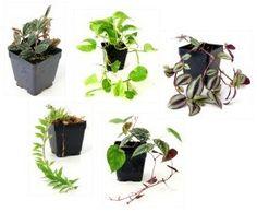 Tropical Vivarium Plant Overview