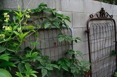 Check out these DIY garden trellis projects, ideas and tutorials and find one that's right for the style, feel, and needs in your garden! Diy Garden, Garden Trellis, Upcycled Garden, Garden Ideas, Garden Junk, Old Gates, Fence Gates, Metal Gates, Old Garden Gates
