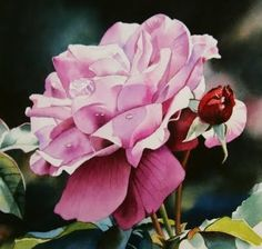Morning Dew, painting by artist Jacqueline Gnott
