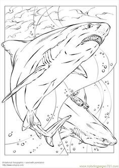 bull shark coloring page for kids and adults from fish coloring pages shark coloring pages see more great white - Great White Sharks Coloring Pages