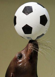 Amazing animal athletes - NY Daily News