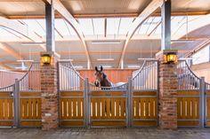 horses tucked inside their stalls