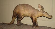 Afbeeldingsresultaat voor aardvarken