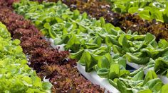 Help fund a hydroponic vegetable growing operation to help feed the homeless and unemployed in the greater Eastern North Carolina area http://www.gofundme.com/feedingeasternnc #charity #food #homeless