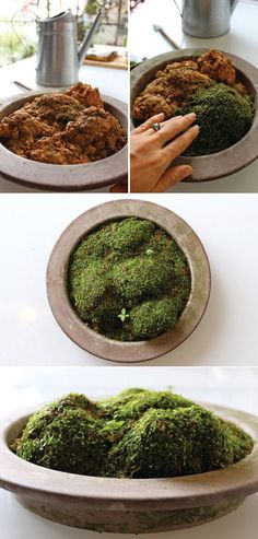 Finished moss garden