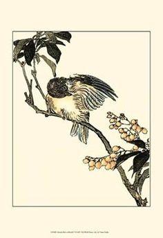 Oriental+Bird+On+Branch+V