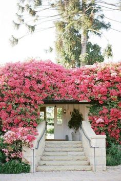 Pretty pink bougainvillea-covered home facade. Beautiful Gardens, Beautiful Flowers, Beautiful Homes, Beautiful Places, Bougainvillea, Dream Garden, Home And Garden, Garden Inspiration, Design Inspiration