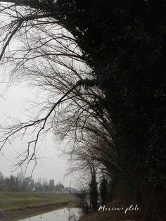 Un Kookaburra In Giardino - Un po' di niente, un po' di tutto: Gennaio