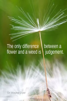 Daily Quotation for June 12, 2013 #quote #quoteoftheday The only difference between a flower and a weed is a judgment. - Dr Wayne Dyer