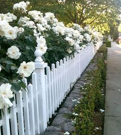 Beautiful white rose hedge along a low fence! I wonder how it looks in Winter. From White Gardens. Fence Landscaping, Backyard Fences, Garden Fencing, Low Fence, Front Yard Fence, Small Fence, Fence Gate, Front Yard Hedges, Gabion Fence
