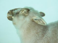 """""""It's not a 'preserved' lamb, it's a dead lamb. But then it does have a kind of new life."""""""