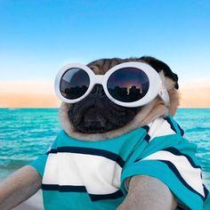 Willow Creek Press 2020 Doug the Pug Box Calendar, White Cute Animal Memes, Animal Jokes, Cute Funny Animals, Funny Animal Pictures, Funny Dogs, Pug Puppies, Cute Dogs And Puppies, Doggies, Doug The Pug