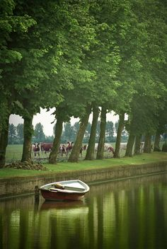 Serene Dutch Pastoral Scene of an Anchored Boat in a Dutch Canal with a Pasture of Cattle - A Fine Art Landscape Photograph