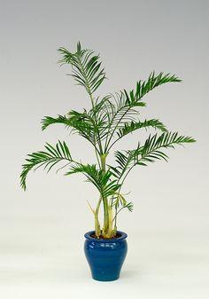 Gallery / Plants