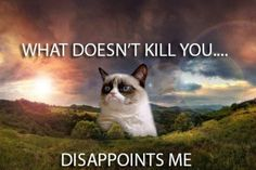 10 Grumpy Cat Memes That Will Crack You Up