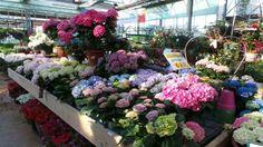 Vieni a Scoprire tutte le foto dei #fiori e delle #piante, presenti presso il nostro Peraga Garden Center di Mercenasco...