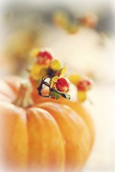 Bittersweet pumpkin by lucia and mapp, via Flickr