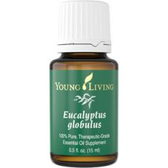 Eucalyptus globulus has a fresh, penetrating scent. It contains a high percentage of the constituent eucalyptol, a key ingredient in many mouth rinses. Applied topically, it is often used to support the respiratory system & to soothe muscles after exercise.